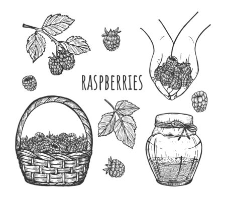 Vector illustration of raspberries set. Berries in straw basket, plant, hands, single and branch, leaf, jam. Vintage hand drawn style.