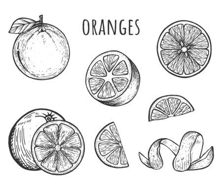 Vector illustration of oranges set. Fruit sliced, whole, half, skin spiral, segment. Vintage hand drawn style.  イラスト・ベクター素材
