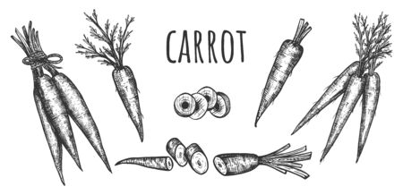 Vector illustration of carrot crop set. Young bunch, slice, whole, pieces, chopped. Farm market product or culinary show ingredient. Vintage hand drawn style.
