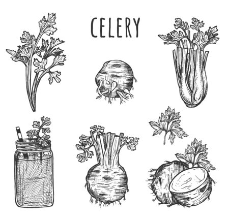 Vector illustration of celery vegetable set. Root, leaves, stems, smoothie. Healthy food. Vintage hand drawn style.