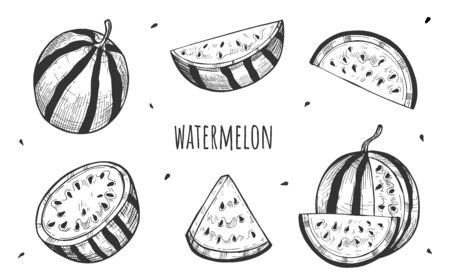 Vector illustration of sweet juicy watermelon set. Berry slice, half, pieces. Fresh summer food. Vintage hand drawn style.