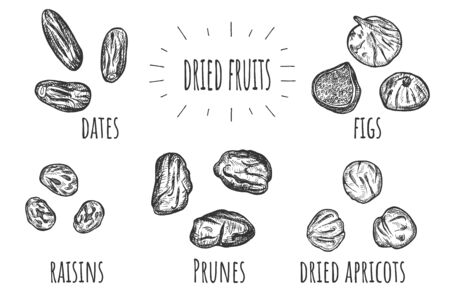 Vector illustration of dried fruits set. Dates, raisins, prunes, apricots, figs. Vintage hand drawn style.  イラスト・ベクター素材