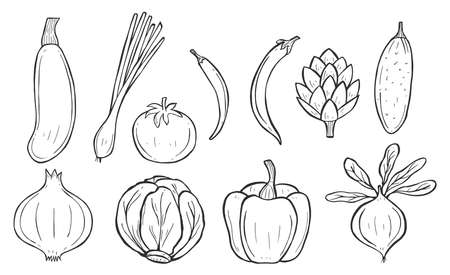 Vector illustration of outline vegetables. Squash, celery, tomato, hot and sweet bell pepper, artichoke, cucumber, onion, cabbage and beetroot. Vintage hand drawn style.