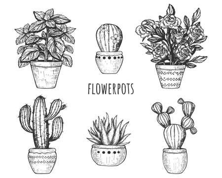 Vector illustration of flowerpots. Blooming flower, cactus and succulent decorative home plants in pot. Vintage hand drawn style.