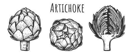 Vector illustration of artichoke set. Fresh ecology whole and half section flower head, side and top view. Vintage hand drawn style.