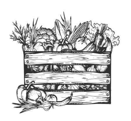 Vector hand drawn illustration of farm vegetables in vintage engraved style. Still life of tomato, sweet paprika, hot pepper, onion, corn, cucumber, eggplant, carrot in wooden crate isolated on white Çizim