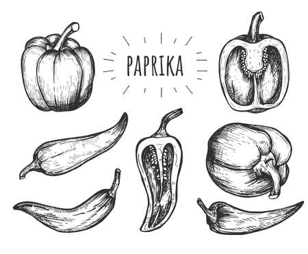 Vector illustration of paprika set. Whole and half section sweet bell and hot chili pepper. Side and top view. Vintage hand drawn style.