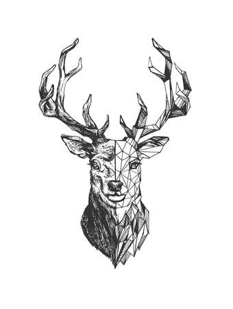 Vector hand drawn illustration of deer in vintage polygonal engraved style. Animal portrait with geometric boho outline element isolated on white background.