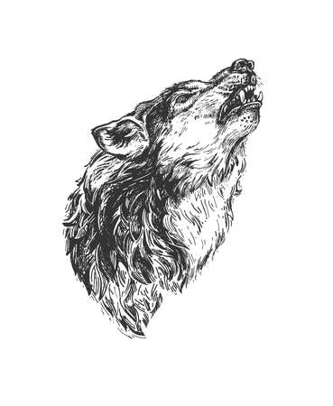 Vector hand drawn illustration of wild fanged wolf howling in vintage engraved style. Animal portrait isolated on white background Ilustracja
