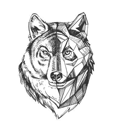 Vector hand drawn illustration of wolf howling in vintage engraved style. Animal portrait isolated on white background. Ilustracja