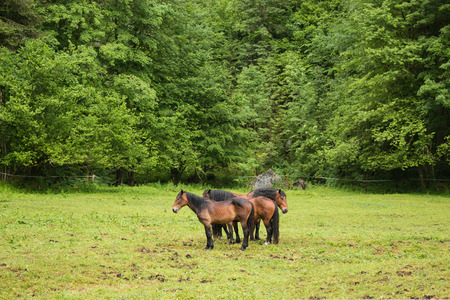 Horses in alpine mountains, away green forest. Walk in summer day in town Hallstatt, Austria
