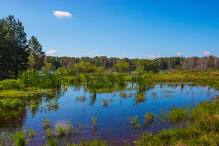 Mysterious forest and lake in field of Russia. Around green trees, blue sky and water. Summer time