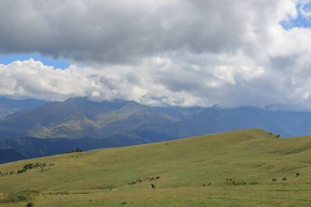 Panorama view of mountains and valley scenes in national park Dombay, Caucasus, Russia, Europe. Dramatic blue sky and sunny summer landscape Stock Photo