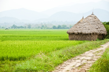 Straw in rice field. Stock Photo - 10114092