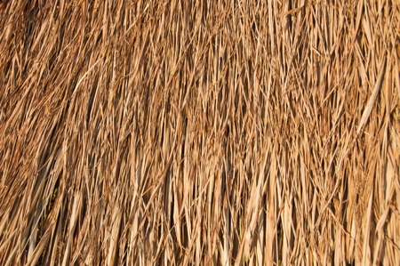 Straw roof of the hut.