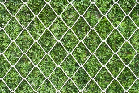 Steel net on green grass  photo