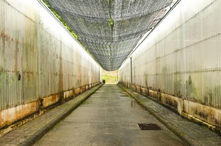 glasshouse: Walkway between glasshouse