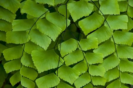 Fern leaf Stock Photo - 18158810