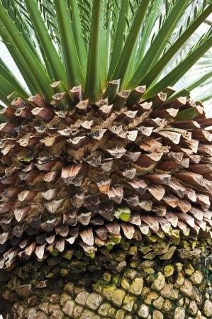 Palm tree  Stock Photo - 18158811