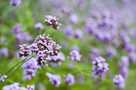 Purple wild flower Stock Photo - 18158812