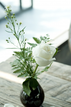 White rose in black vase  Stock Photo - 18448480