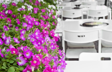 Petunia in outdoor restaurant  Stock Photo - 18448485