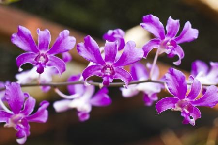 Orchid Stock Photo - 18676543
