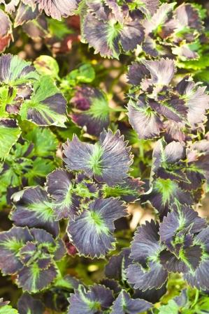 Colorful leaf Stock Photo - 18676578