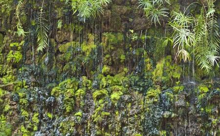 Moss and lichen Stock Photo - 18676596