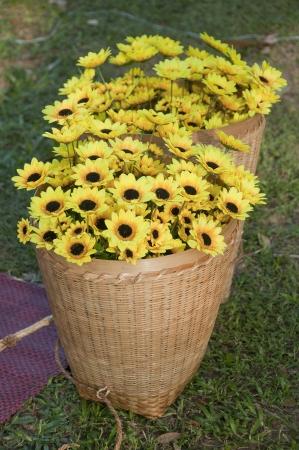 Yellow flower in bamboo basket  Stock Photo