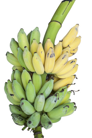 Bunch of bananas isolated  photo