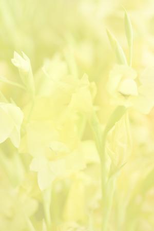 soft focus: Flor de enfoque suave para el fondo la naturaleza.