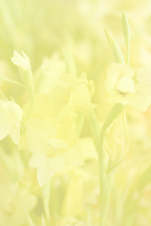 Flower soft focus for nature background. Stock Photo