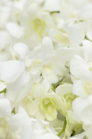 White orchid in health spa, soft focus. Stock Photo