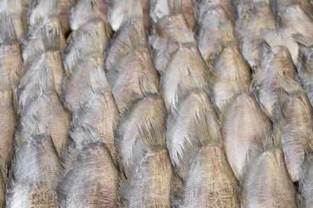 gourami: Dry preserved Gourami fish in market.