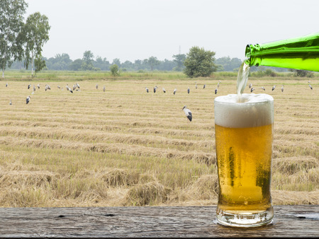 Enjoy beer with rice field landscape.