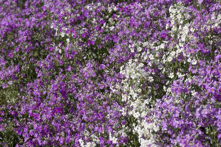 wild grass: Flor hierba salvaje en la naturaleza.