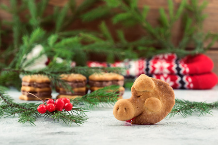 Cookies in the form of a pigs head-the symbol of 2019, Christmas decorations, branches of green spruce, viburnum berries.