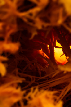 Abstract texture. Orange thick fibers. Backlighting. Fantastic plot. The middle of a ripe pumpkin.