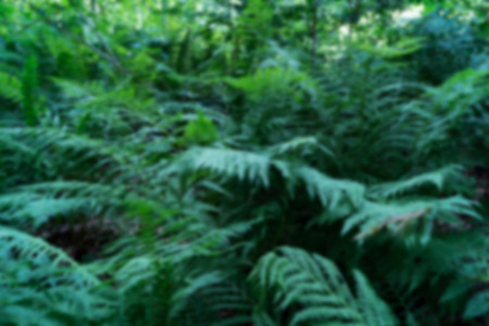 Blurred green background with plants. Fern twigs in defocusing. Texture of summer forest in blur.