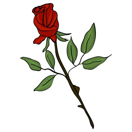 Vector image of a red rose on a white background. Bud with red petals, green leaves and stems on a white background.