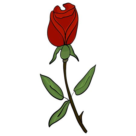 Red rose on a white background. Vector image in a flat style to create a botanical ornamentation. Illustration