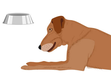 A hungry dog ​​looks at an empty bowl while waiting for food. Vector in a flat style isolated on a white background.