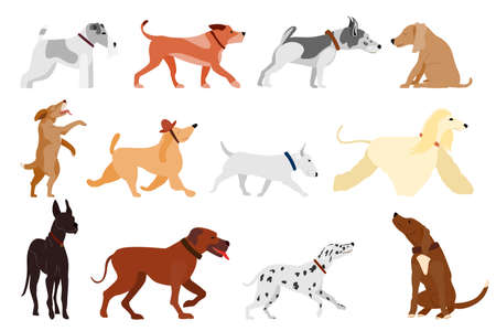 A set of dogs of different breeds in different poses. Vector in a flat style isolated on white. Pets in a collar. Dogs run and sit. Vectores