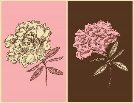 azal�e: Azal�es. Vintage floral design. Vector illustration.