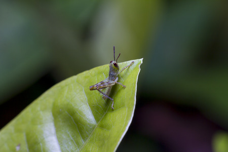 close up Grasshopper Stock Photo