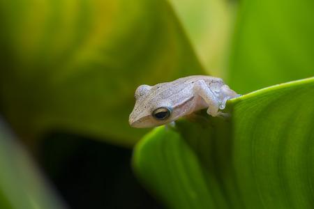close up frog Stock Photo