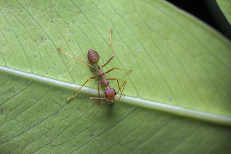 formic: ants and green leaf background