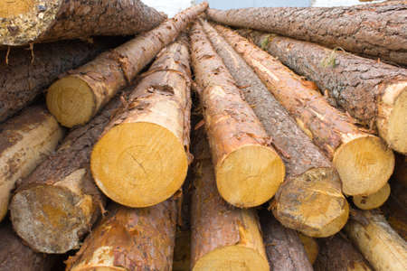 The big heap of the cut pine logs Stock Photo