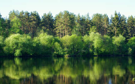 Tree`s of the water. Landscape with river. photo